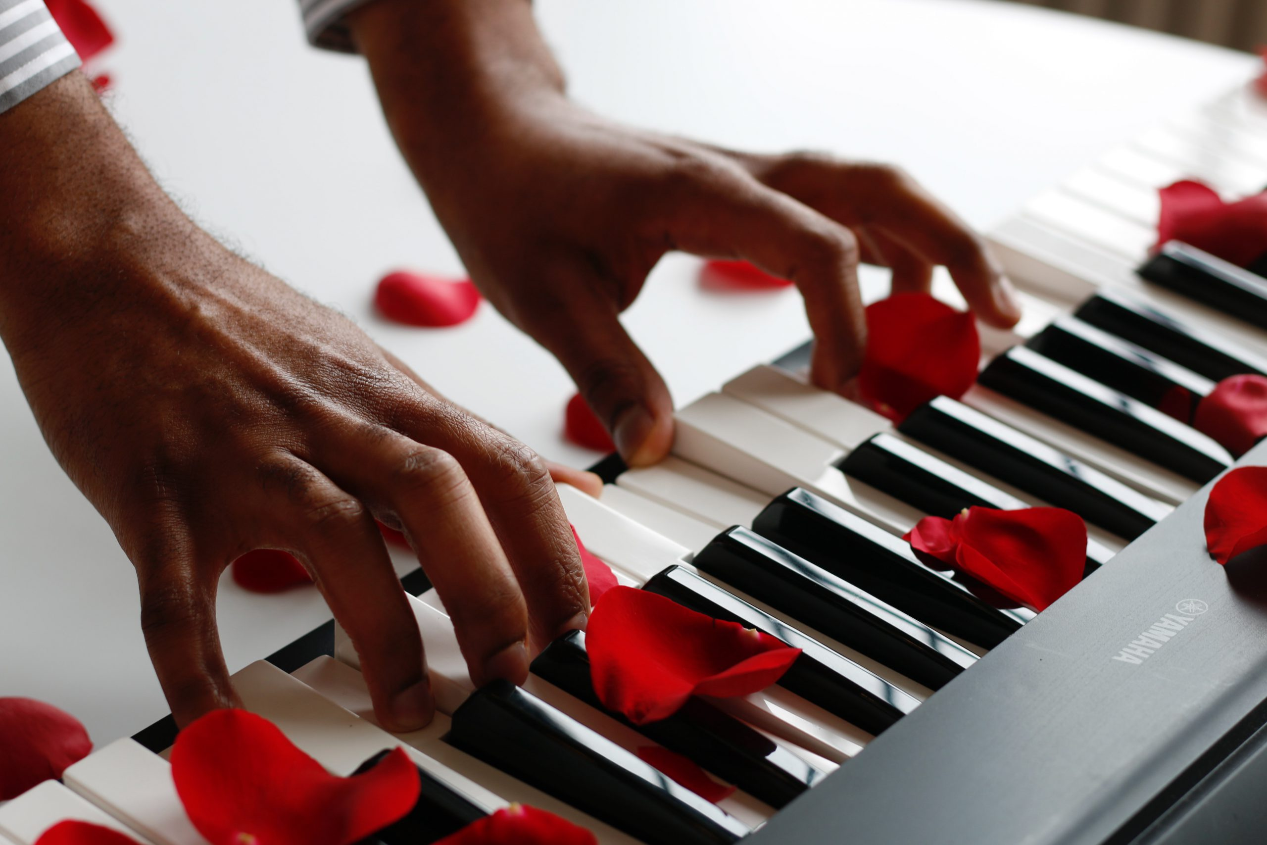 red rose petals on a white keyboard while someone is playing